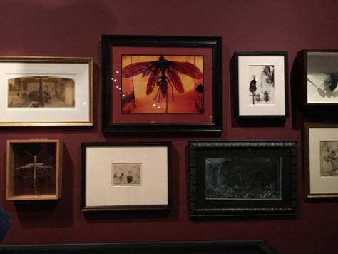 Del Toro Exhibit 8
