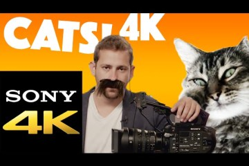 Sony 4K Channel Intro Cat Video