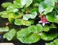 Fish pond turned frog pond.