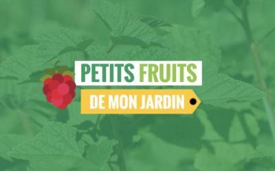 Petits fruits… de mon jardin !