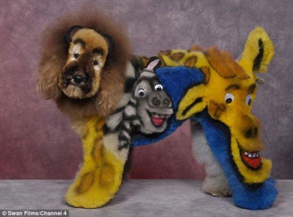 Los personajes de Madagascar en tu perro