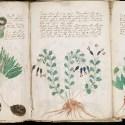 Significado del Manuscrito Voynich