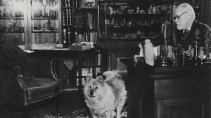 Jofie el perro de Sigmund Freud