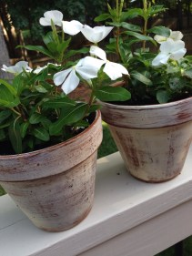 mike and i whitewashed a dozen clay pots; i'd seen an example on pinterest -- easy and love the effect (these were on front porch of venue)
