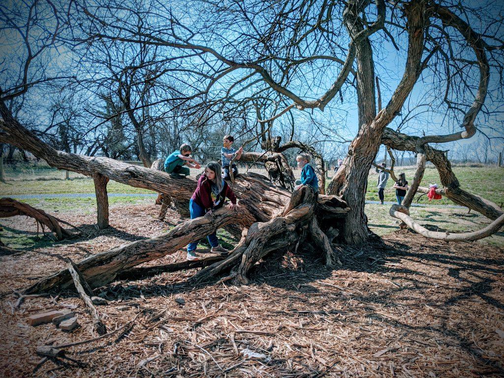 Group of children climbing on a live oak