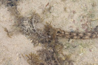 """There were lots of these funny sea cucumbers that look like snakes and have a """"flower"""" as a mouth - interesting"""