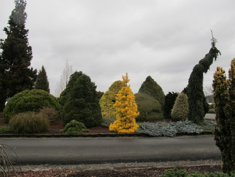 jappalachian gardens, transplanted and still blooming, conifer gardens, cinthia milner, jon merrill