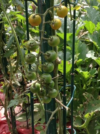 BB Barns Garden Center, Garden Tours, Transplanted and Still Blooming, Cinthia Milner