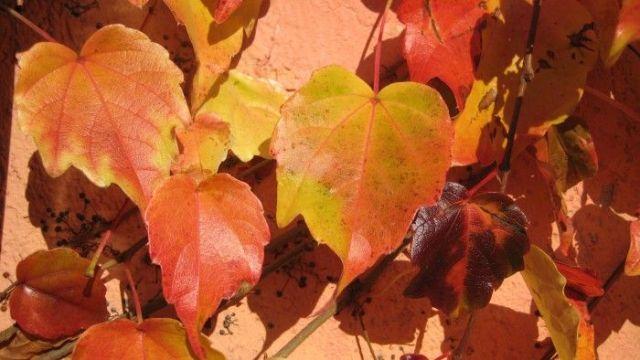 Folhas amareladas de outono.