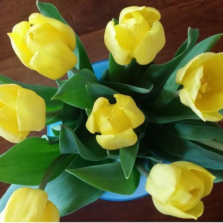 Cinzia Pedrani, Tulipani gialli