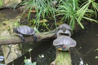 "Turtles ""welcoming"" the CIPSEM group to tropical Asian and African flora sections"