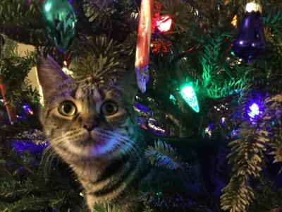 Kerstboom gevaarlijk huisdier