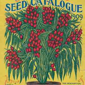 #3915 Mexican Bouquet Peppers, 1909