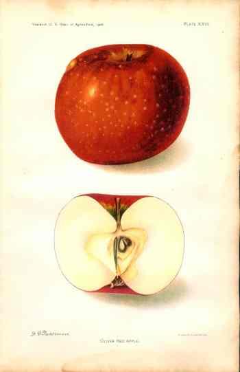 452 oliver red apple dept of ag 1906