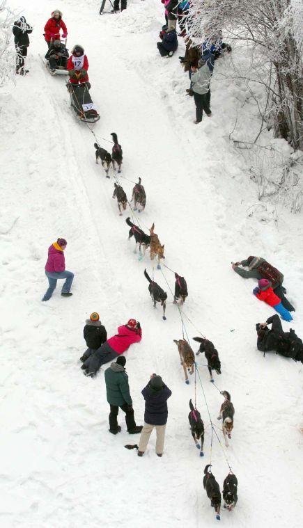Yukon Quest Dog Team