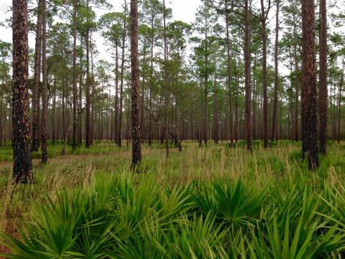 Olustee cover