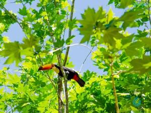 Observação de Aves Circuito das Águas