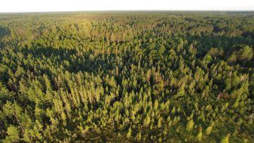 Billion Trees
