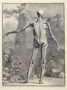 a figure displaying the inner musculature of the back of the body stands akimbo in front of a landscape of plants, rocks, and a ruined stone wall