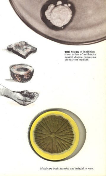A close up photograph of a mold growth set into a cutout in a book next to a photograph of mold growing in a Petri dish.