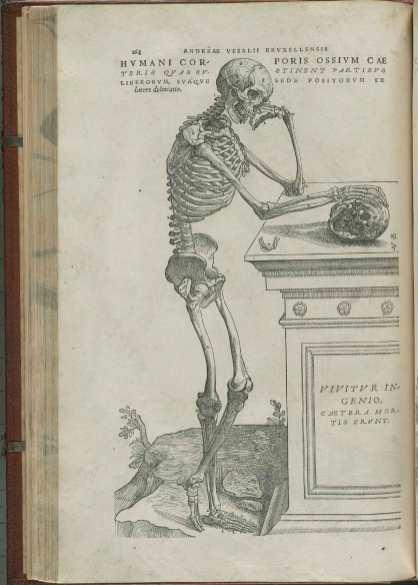Illustration from Vesalius's De Fabrica showing a skeleton comtemplating a skul
