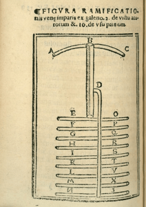 A woodcut illustration of the venous system.