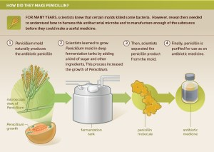 Illustration of how penicillin is made.