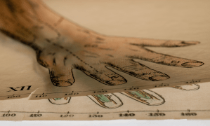 An illustration of the anatomy of a hand with a thin layered overlay of the skin.