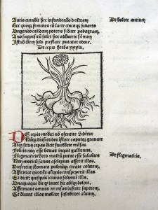 Engraving of a bunch of onions, with roots, foliage and flower.