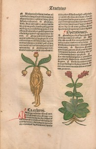 Female human figure with a mandrake plant growing from the top of her head.