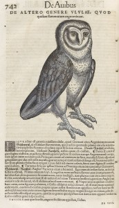 Drawing of an owl.