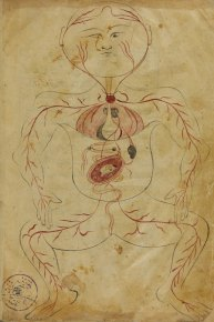 A hand drawn anatomical illustration from an Arabic manuscript.