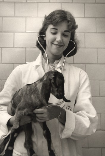 An NIH Veterinarian Checks the Heart Rate of a Baby Goat.