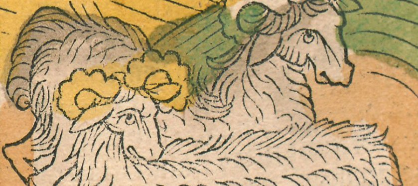 hand colored woodcut of two sheep.