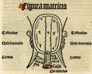 A woodcut print providing a rough diagram of a uterus with labels in Latin.
