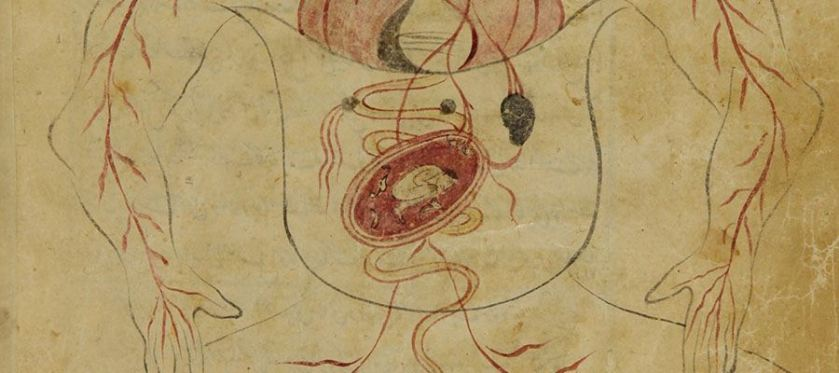 A drawing roughly representing a human body with organs, including a uterus with a tiny figure inside and circulation system.