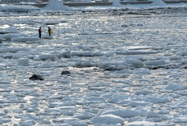 The drift ice is really close to the shore this time. And people are going in to scout for fresh seafood.
