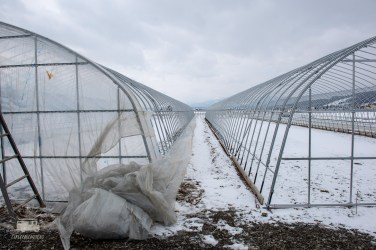 They are getting ready for spring, setting up green houses and trying to melt the final layer of snow as soon as possible.