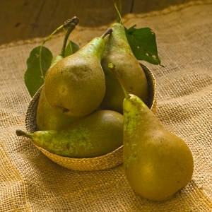pears freshly picked