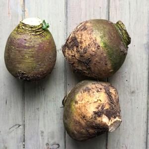 harvested swede