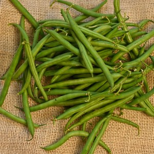 French beans harvested