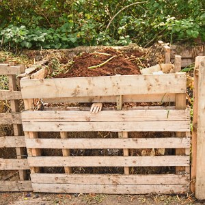 compost and hand