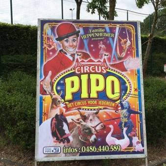 pipo5
