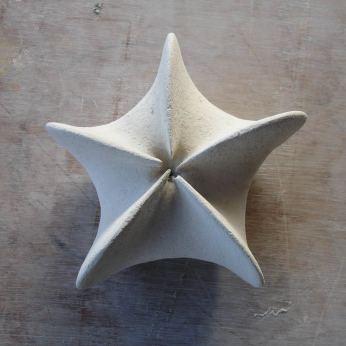 Silene conica - schets