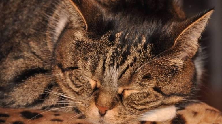Citaten En Wijsheden Over Tijd : Citaten en spreuken over slapen