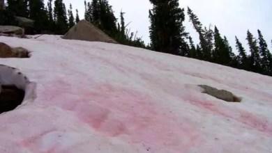 Photo of Nieve rosada: Un extraño fenómeno ambiental