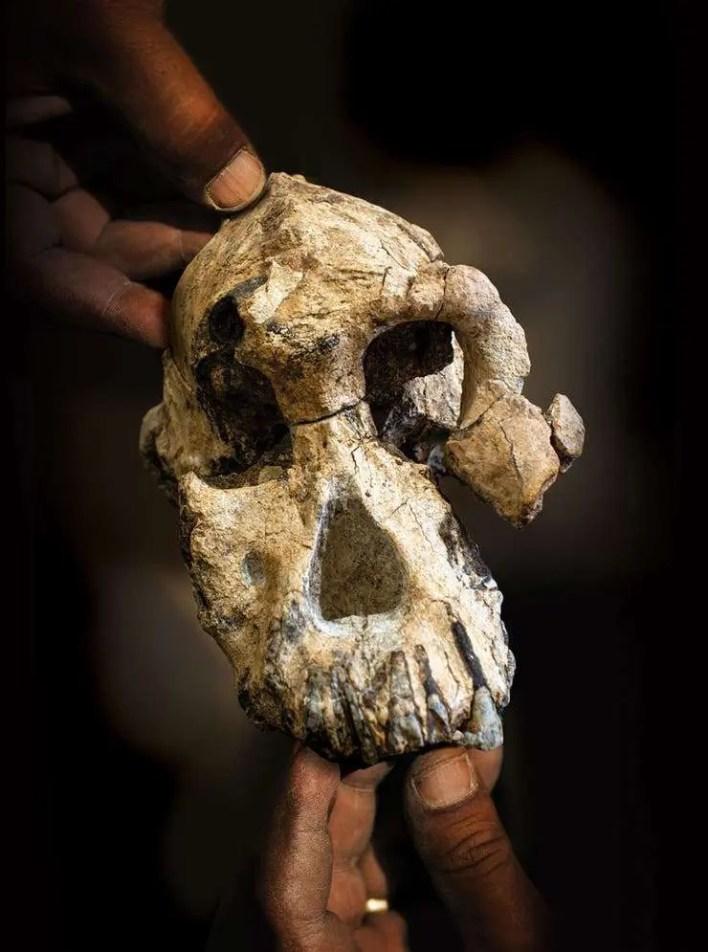Descubren cráneo de fósil humano de millones de años