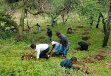 Photo of Etiopía planta 350 millones de árboles en solo un día para combatir el cambio climático