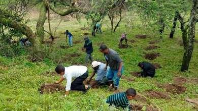Etiopía plantando árboles para combatir el cambio climático