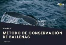 الحفاظ على الحيتان